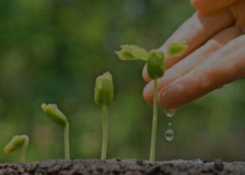 Groeitraject